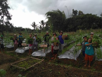 Community in Ketapang, West Kalimantan, reap the benefit fro alternative livelihood programme from GAR that helps to improve their economy and food security through agriculture and farming.