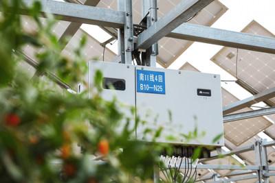La solución fotovoltaica inteligente insufla vida en un paisaje desértico (PRNewsfoto/Huawei)